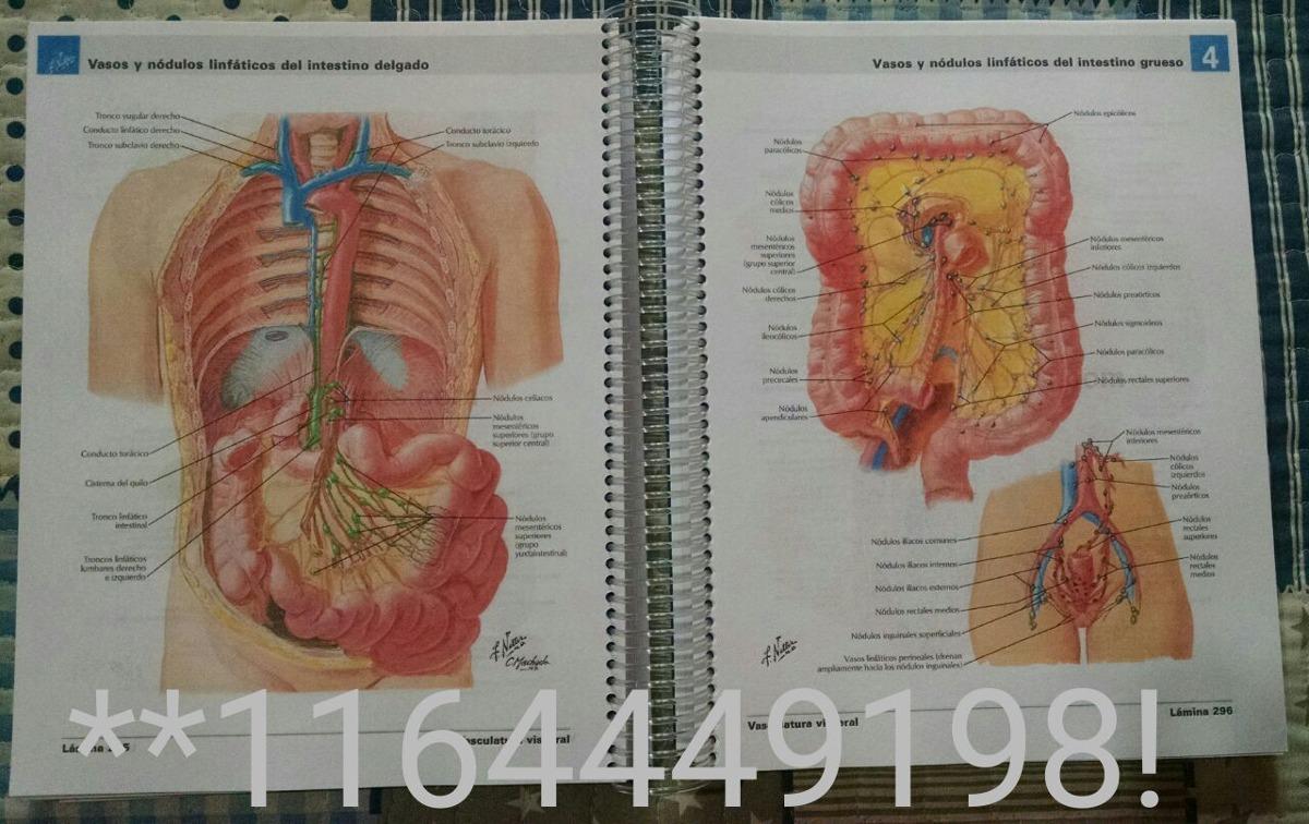Excepcional Mayville La Anatomía Y La Fisiología Universidad Estatal ...
