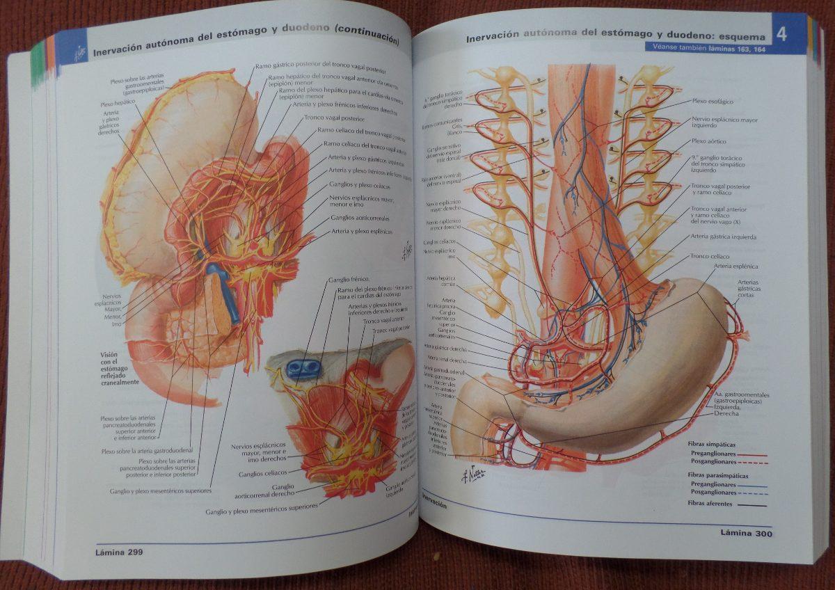 Atlas De Anatomía Humana Netter 6ta Edicion +cd Envio Gratis ...
