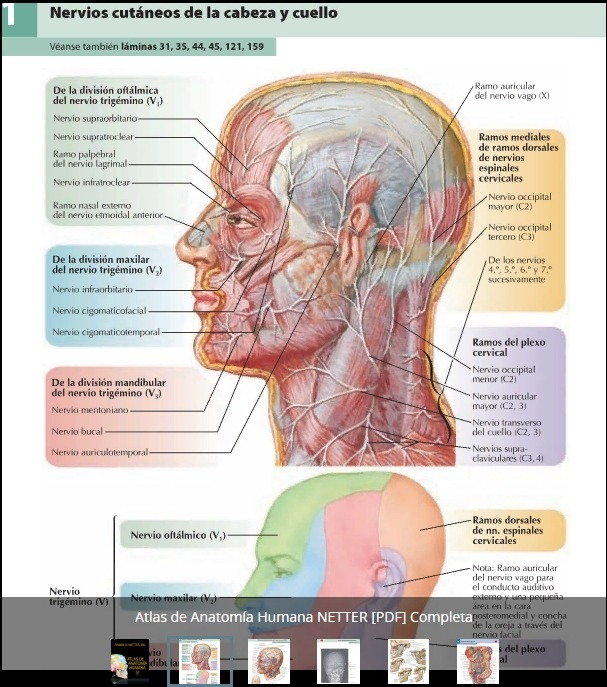 Asombroso Anatomía Y Fisiología Humana Marieb 7ª Edición Pdf ...