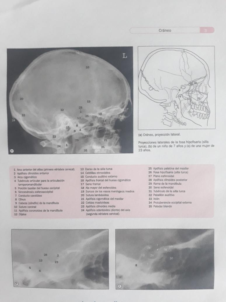 Atlas De Anatomia Humana Por Técnicas De Imagen Weir 4ed - $ 15.000 ...