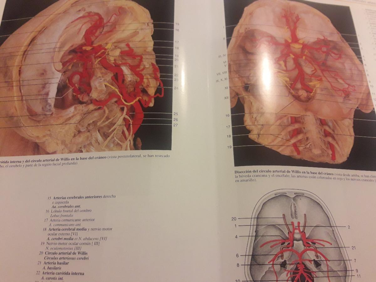 Atlas De Anatomía Humana Quinta Edición - $ 1.500,00 en Mercado Libre