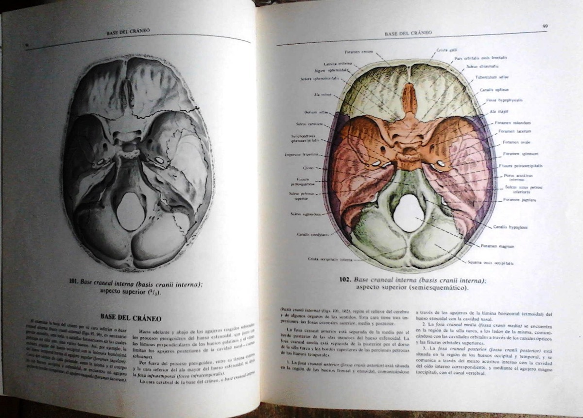 Atlas De Anatomia Humana Sinelnikov Tomo 1 - $ 400,00 en Mercado Libre