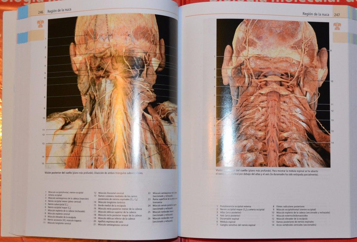 Lujo Fundamentos De La Anatomía Y La Fisiología De 8ª Edición De ...