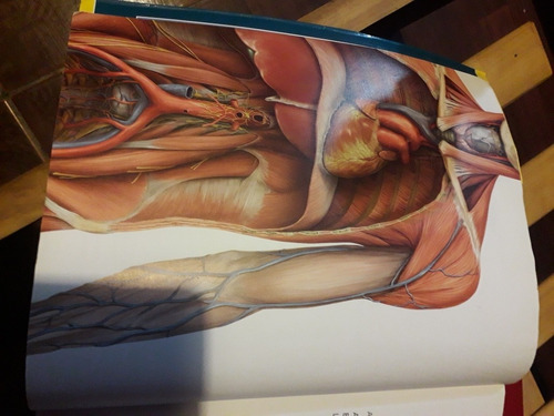 atlas de anatomia prometheus
