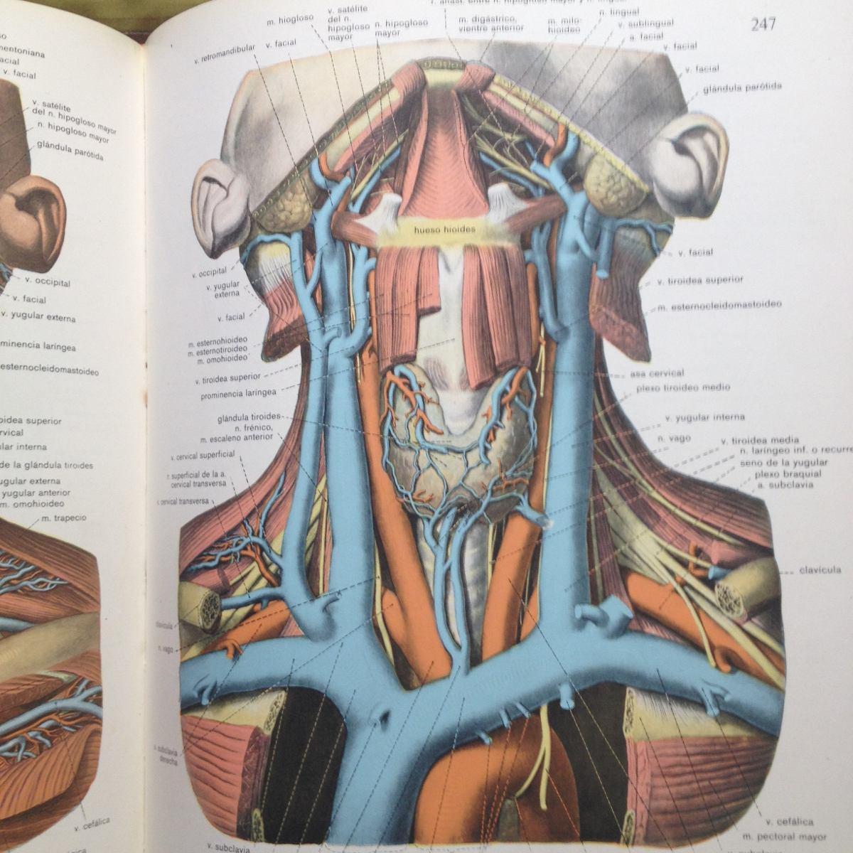 Atlas De Anatomia Sobotta - Bs. 500,00 en Mercado Libre