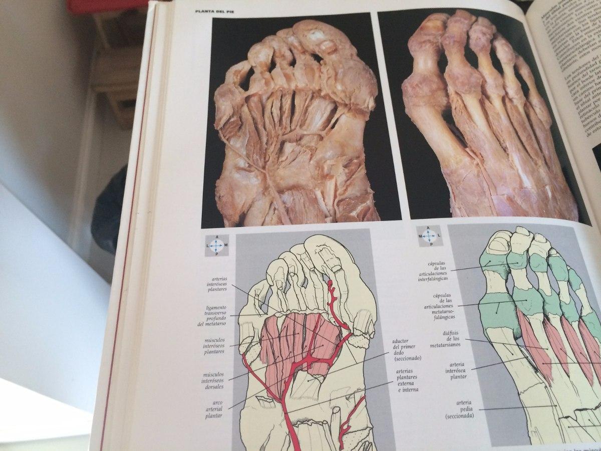 Atlas De Anatomia Yokochi/rohen Medicina - $ 1.500,00 en Mercado Libre