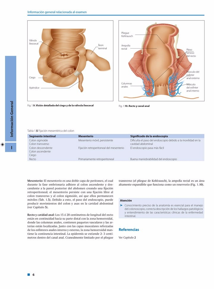Hermosa Anatomía Del Colon Con Procedimiento De Colonoscopia ...