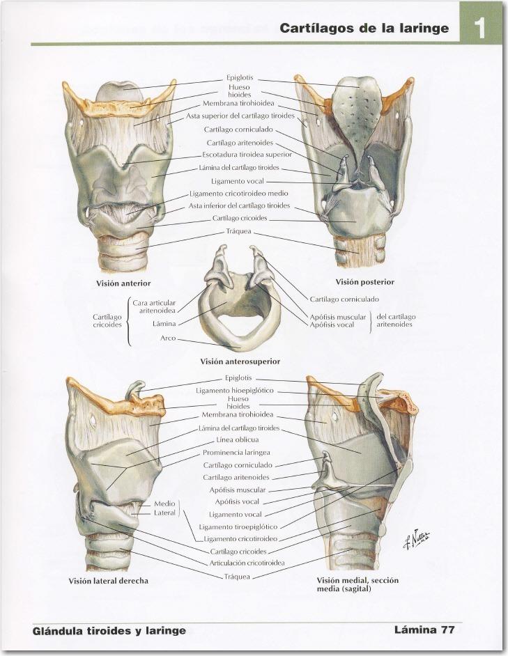 Atlas De La Anatomía Humana 4 Edición - Frank H Netter, Md - $ 75,00 ...