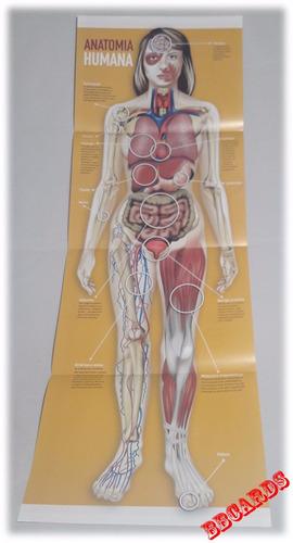 atlas do corpo humano kit em 5 volumes + pôster anatomia