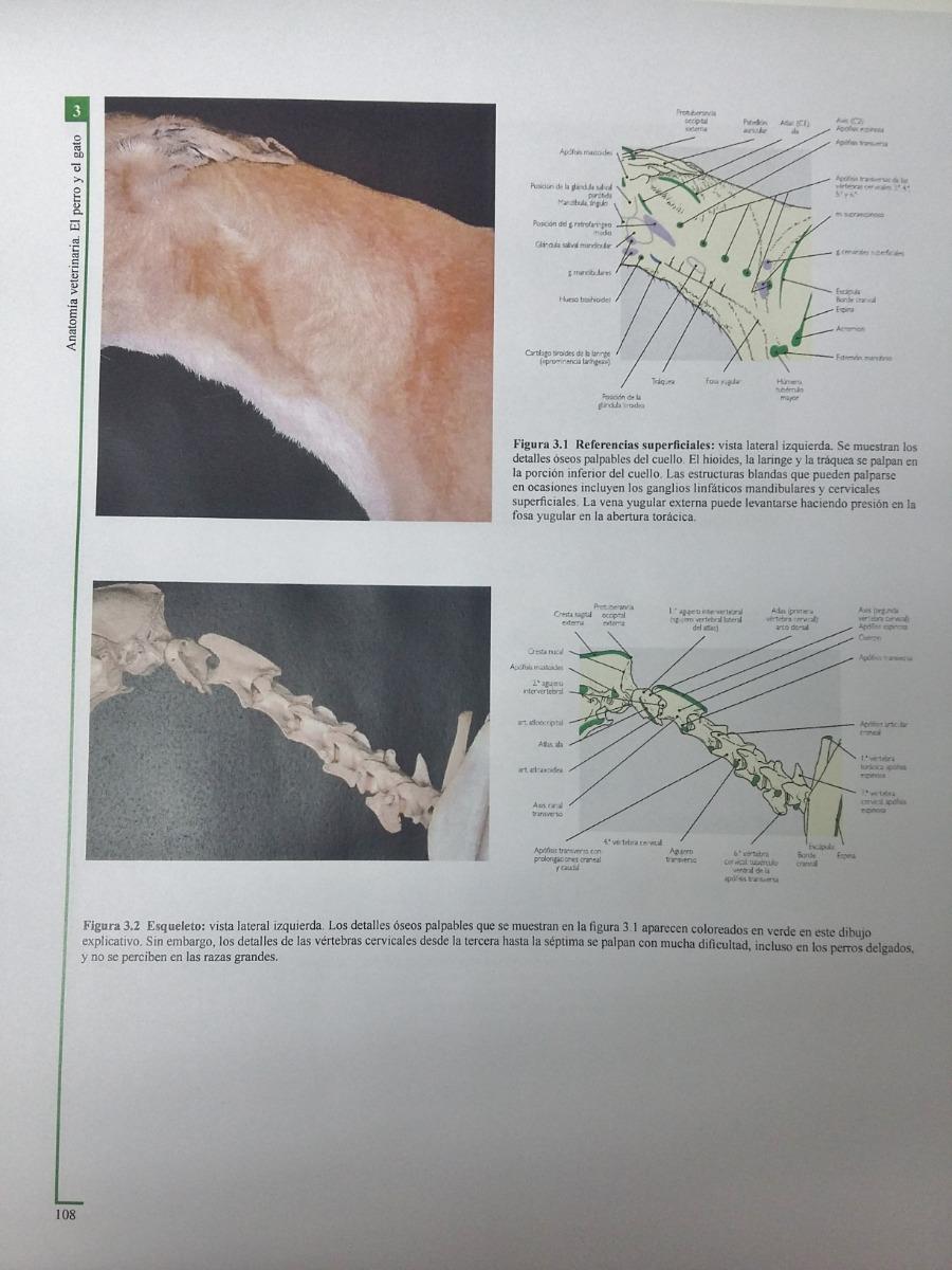 Atlas En Color De Anatomía Veterinaria: El Perro Y El Gato ...