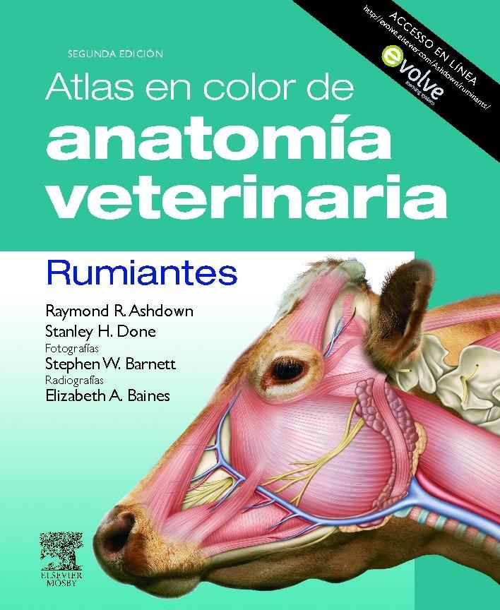 Increíble Anatomía Y Fisiología Animal Tarjetas De Memoria Flash ...