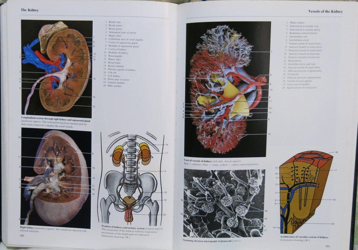 Atlas Fotográfico Anatomía Color De Rohen Yokochi - $ 300.000 en ...