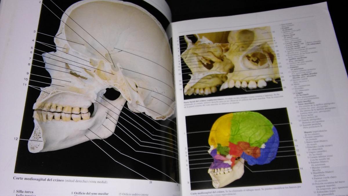 Famoso Atlas De Anatomía Rohen Cresta - Imágenes de Anatomía Humana ...