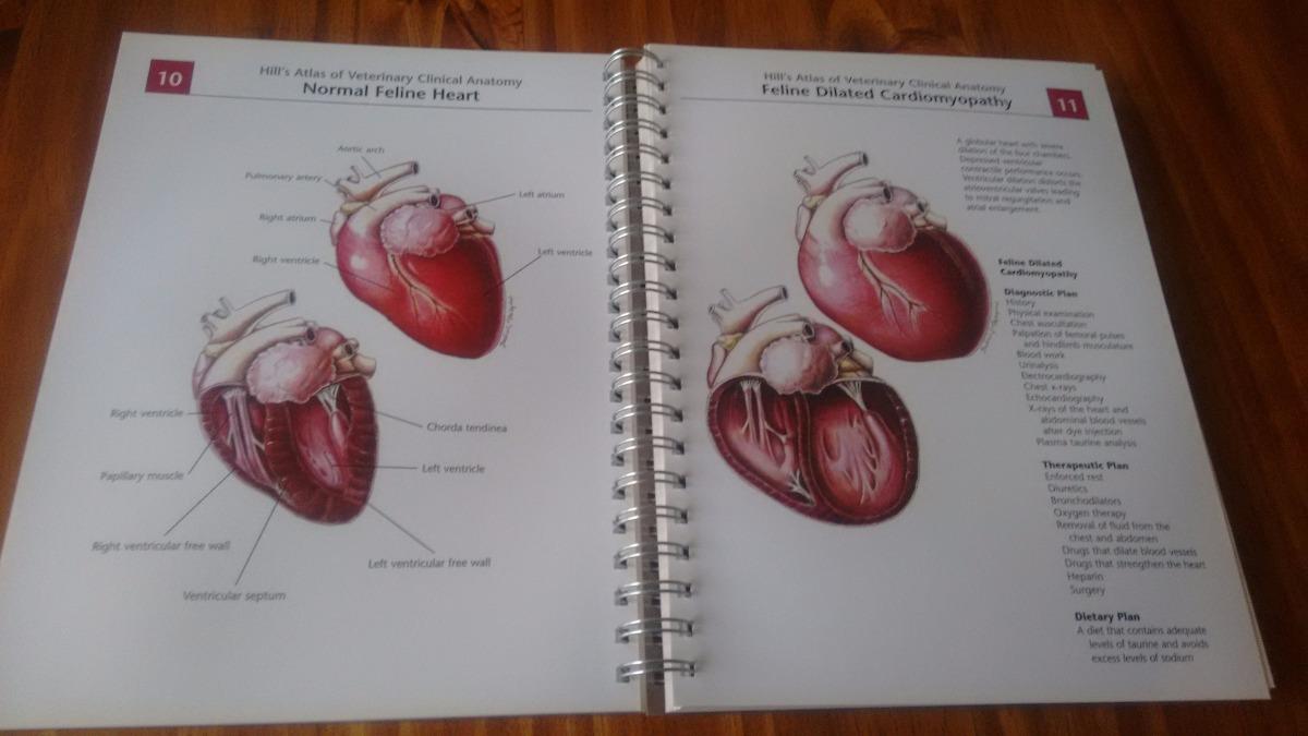 Lujoso Saunders Tarjetas De Memoria Flash De Anatomía Veterinaria ...