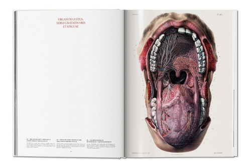 atlas of human anatomy and surgery - bourgery - ed. taschen