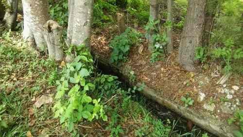 atractivo terreno colindante con rio