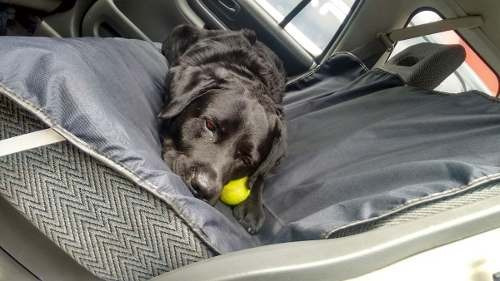 auto mascota cubre asiento