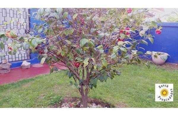 av. la florida - rojas magallanes
