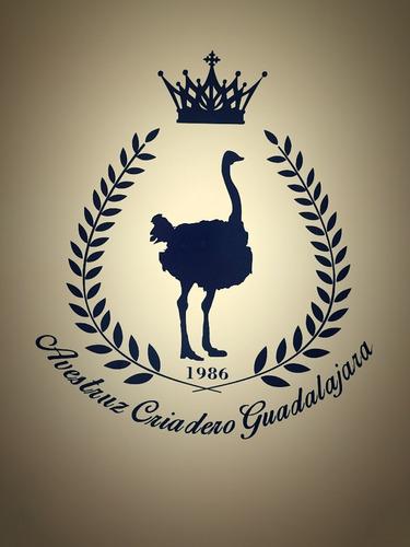 avestruces polluelo de 2 meses