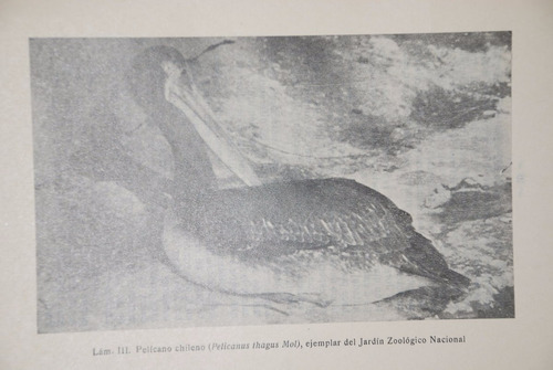 avifauna chilena estudio carlos reed philippi 1939 fotos zoo