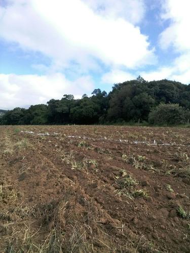 b01 terrenos em ibiuna, 300 mts do asfalto 10km de piedade