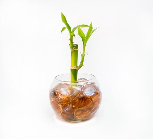 bambú de la buena suerte en bola de vidrio decorativa