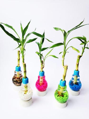 bambu de la suerte en bola de vidrio n 6