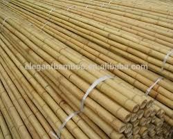 bambu vara e neem 03 mudas citronela 04 e 02 capim santo