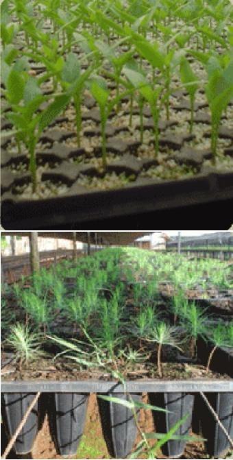 Bandeja Germinación Cultivo Almacigo Huerta X 20 Unidades