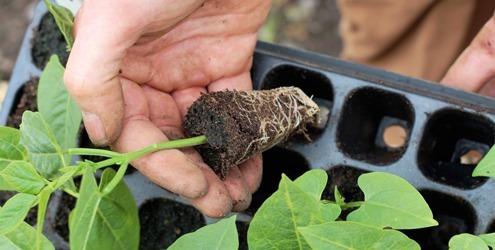 bandeja germinacion o semillero  288 cavidades x 10 unidades