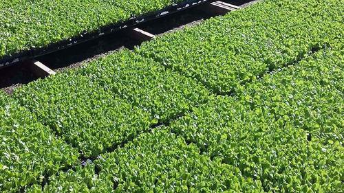 bandeja para mudas / sementeira - 128 células - 20 unid.