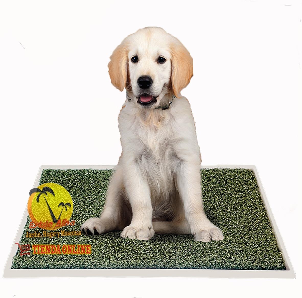 Bandeja Sanitaria Pañopet® Carpet Max 70 X 55 Cm + 5 Paños - $ 2.200,00 en Mercado Libre