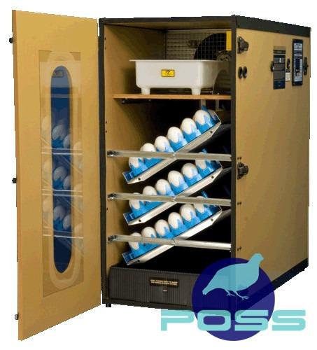 bandejas para incubar huevos de aves - pavos y gansos