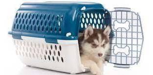banho cães e gatos.