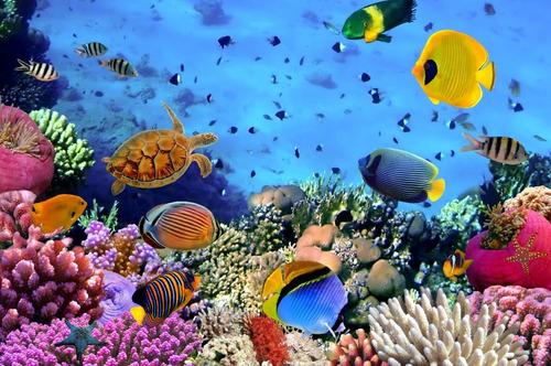 banners-murales-gigantografias-fondo del mar