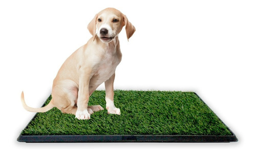 baño ecológico xxl perros gatos doggy potty petwoow r1032