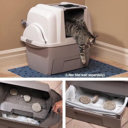baño sanitario gatos