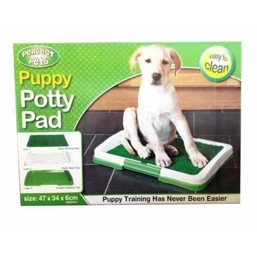 baño sanitario perros