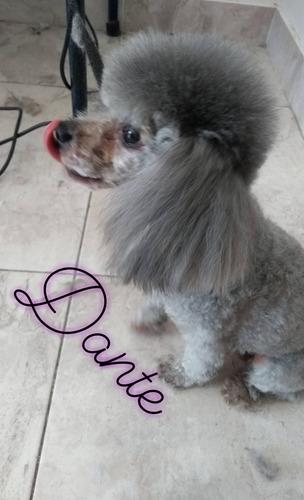 baño y peluquería canina haedo, luzuriaga, ramos, z.oeste
