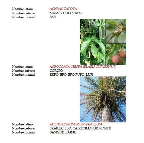 baños magicos de hierbas de santeria y palo (2 libros)