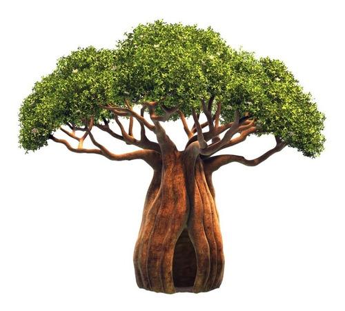 baoba adansonia digitata baobab bonsai sementes para mudas