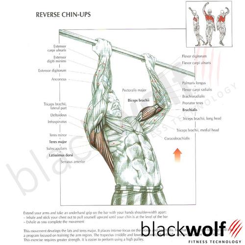 barra fixa musculação