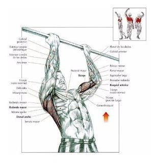 barra puerta ajustable ejercicios acero inox origina/forcecl