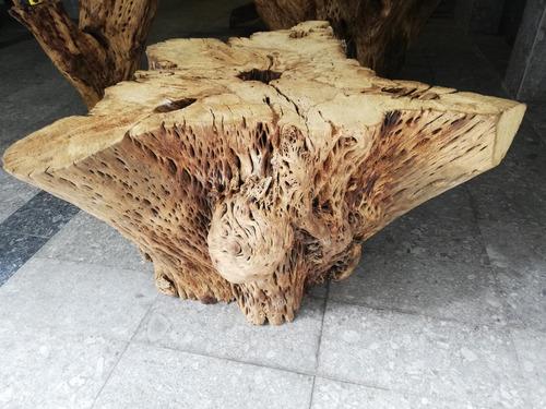 base para mesa de raiz de cactus!!