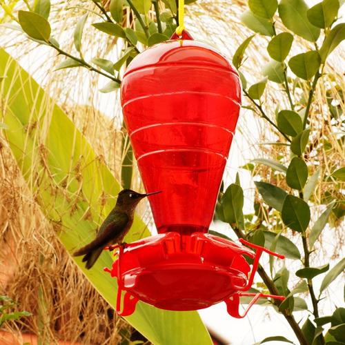 bebedero para colibri - picaflor  pethome chile