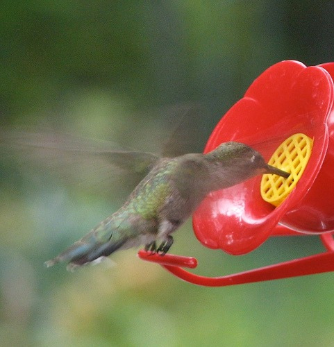bebedero para colibries 14 x 24,5 cm pethome chile