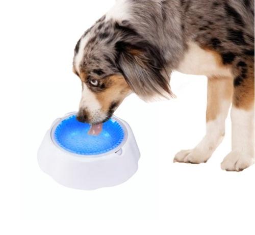 bebedouro tigela fria gel pet para cães e gatos