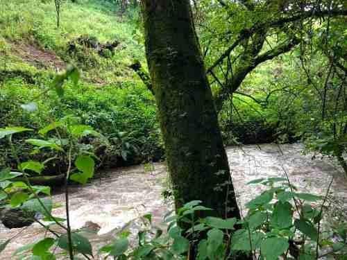 bellísimo terreno productivo que colinda con río.