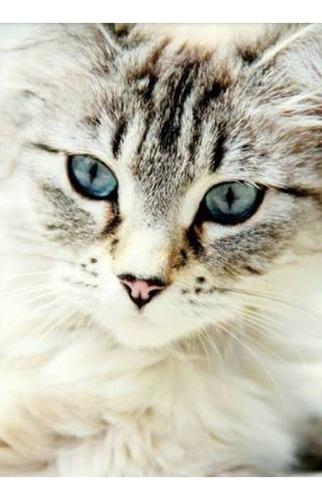 bellos gatos en adopcion gratuita gratis