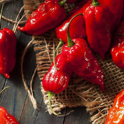 bhut jolokia ghost pepper seeds rojo orgánico hot chil...